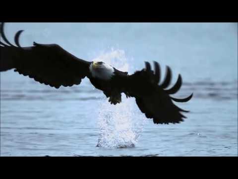 Fly Like An Eagle ~ Steve Miller Band {Music  HD}