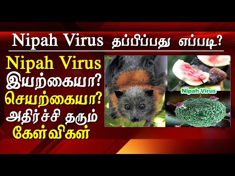 nipah virus - nipah virus origin outbreak and  symptoms in tamil For Second time in 2019 Kerala town Ernakulam come to the attack of nipah virus originated in Malaysia sungai nipah village nipah virus one of the Deadly virus that spreads through pigs and infected bats.   with the incubation period of 5 to 15 days, virus nipah symptoms includes headache heavy fever tiredness and nausea confusion mind. this video explains all you need to know about nipah virus and its symptoms explained in tamil - latest tamil news online   for tamil news today news in tamil tamil news live latest tamil news tamil #tamilnewslive sun tv news sun news live sun news   Please Subscribe to red pix 24x7 https://goo.gl/bzRyDm  #tamilnewslive sun tv news sun news live sun news