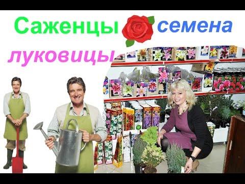 """Покупки с сайта """" Ozon.ru"""". Саженцы, луковицы и семена из Садового центра."""