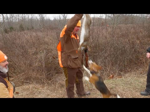 Hunting Huge Swamp Rabbits In Western Kentucky