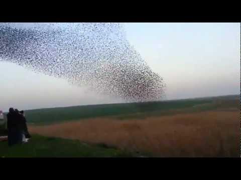 מופע ארובטי של ציפורים