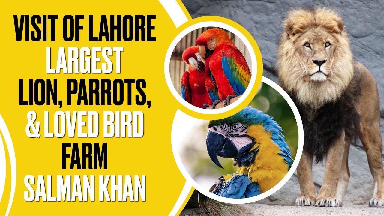 Visit Of Lahore Largest Lion, Exotic Parrots & Loved Bird Farm Salman Khan
