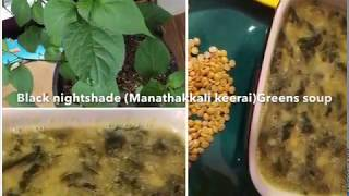 Garden to table | Healthy and Nutritious Black nightshade Greens (Manathakkali Keerai)Soup