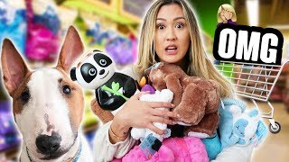Download Buying My Dog Everything He Touches Mp3 and Videos
