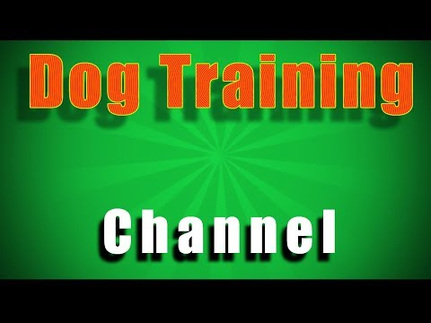 How Dog Training Works with Smart Dog Training Ideas Free