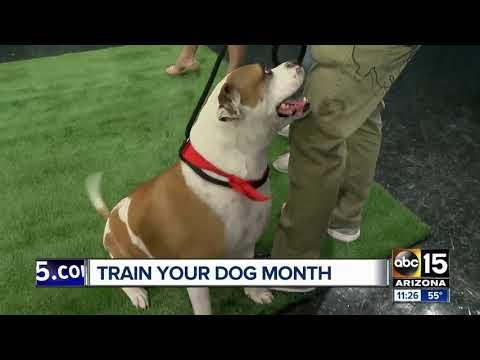 Arizona Humane Society holding training special