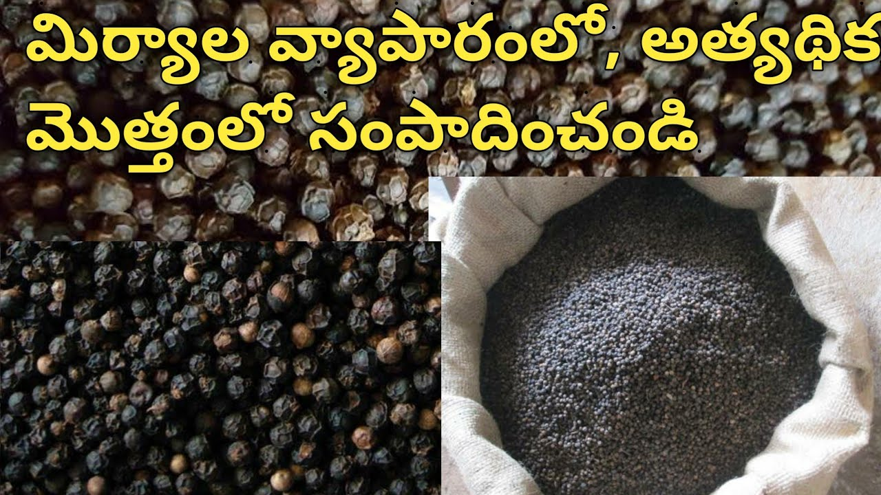 BUSINESS IDEAS IN TELUGU BLACK PEPPER BUSINESS NEW BUSINESS IDEAS LATEST BUSINESS IDEAS BUSINESS