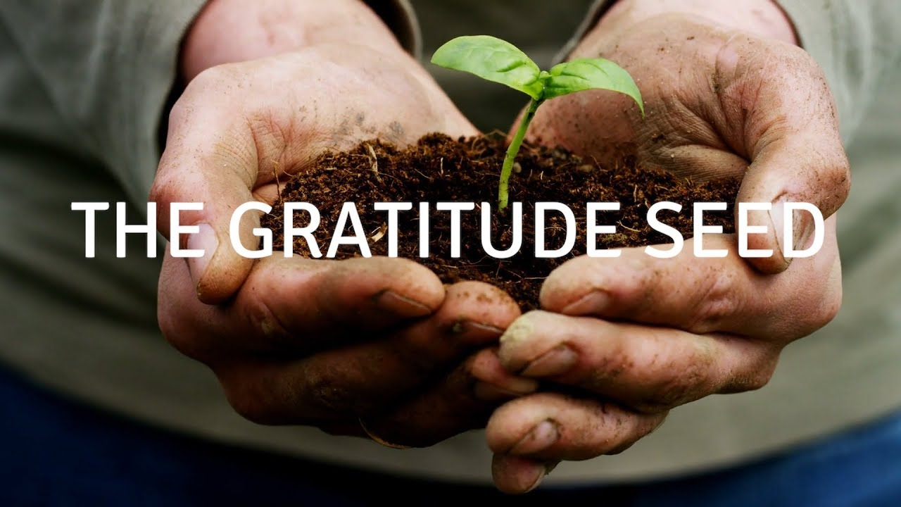 The gratitude seed (MUSIC) A guided meditation for sleep and healing