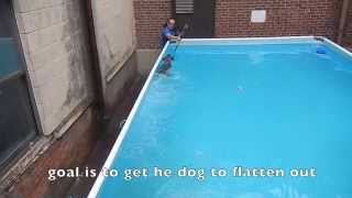 Dog Swimming How To Do It Yourself Dog Training