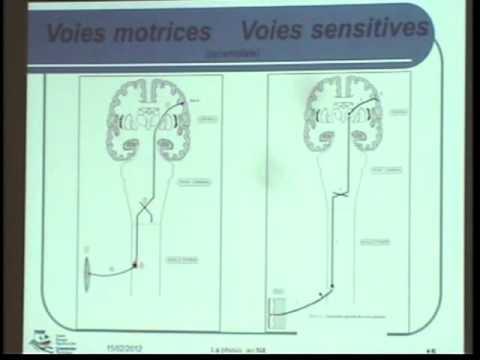 E-learning Plongée Niveau 4 - Système Nerveux