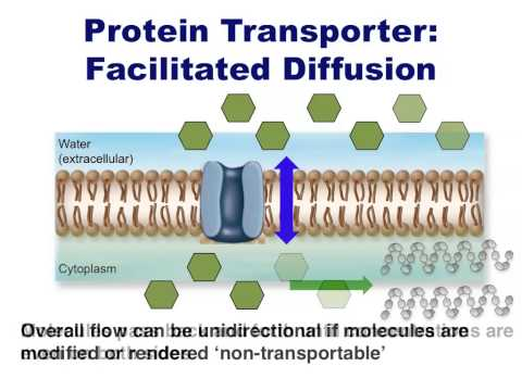 Human Anatomy and Physiology: Diffusion and Transport