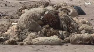 صناعة الجلود في تونس.. تنازع