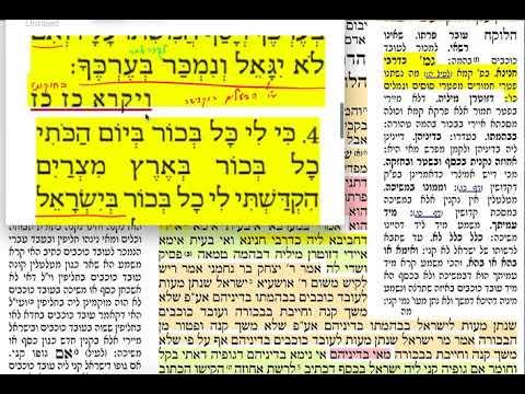 בכורות יג 13 שלישי כ״ה ניסן הדף היומי מסכת בכורות. שמואל נבון ירושלים