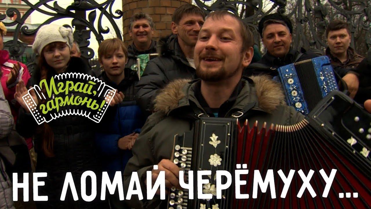 Играй, гармонь! | Антон Грибанов (г. Томск) | Не ломай черёмуху...
