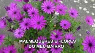 MALMEQUERES E FLORES DO MEU BAIRRO