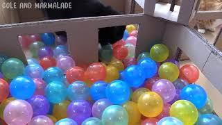 Лучшие кошачие шарики  Кошки играют с шариками