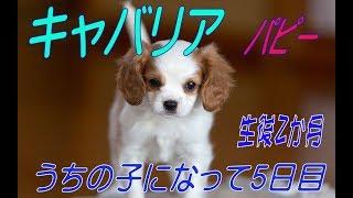 くぅは山形県天童市の武田クリーニングの看板犬だよっ! くぅのSNSアカ...