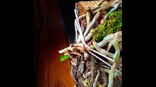 Реанимация ОРХИДЕИ/ orchid rehabilitation(, 2014-09-07T01:50:16.000Z)