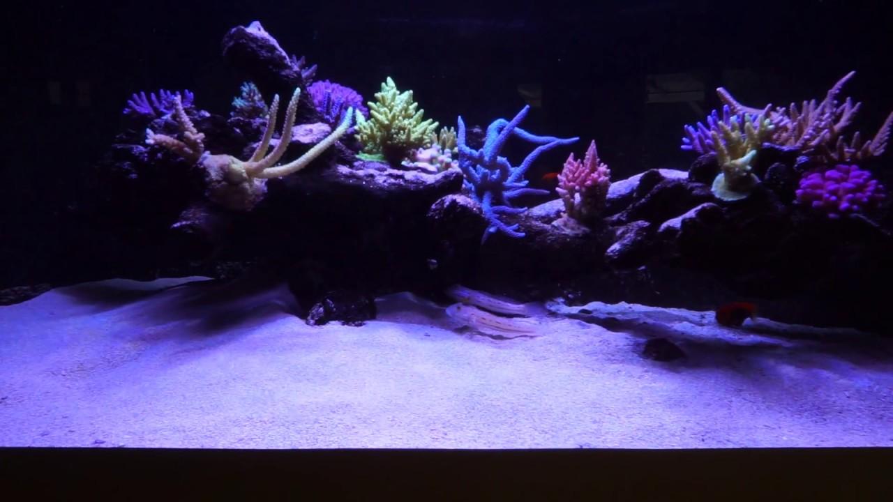 Deltabecken 500 Liter Als Floating Reef Aquascape Reef