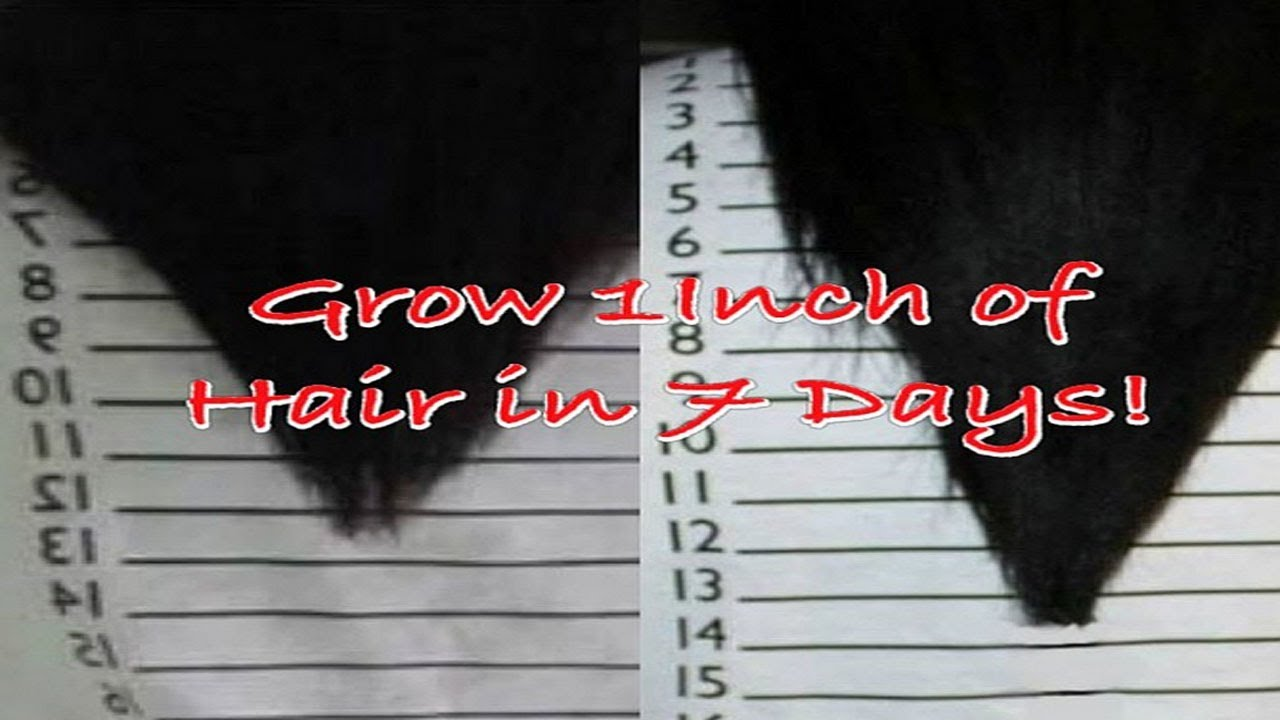 The Inversion Method - Grow 1-2 Inches of Hair in 7 Days! - YouTube