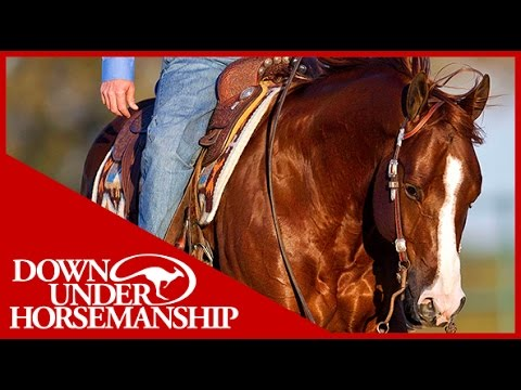 Clinton Anderson: Square Pen Control, Part 1  Downunder Horsemanship