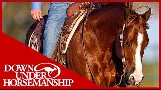 Clinton Anderson: Square Pen Control, Part 1  Downunder Horsemanship