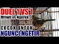 Sirtu Cipoh Tarung Duel vs Suara Khas Meriwit Saling Sahutan  Mp3 - Mp4 Download
