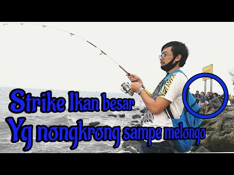 Strike Ikan Besar || Pantai Tanjung Pasir #nojukeofficial #story #mancingmania #Tangerang