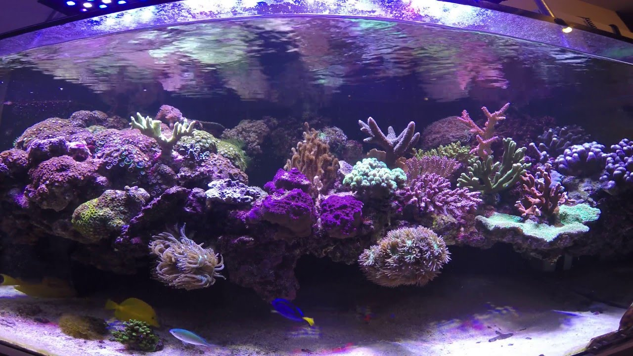 Dymico floating reef tank in 4K 08-03-2016 - YouTube