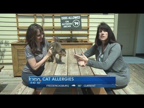 My Pet: Cat Allergies