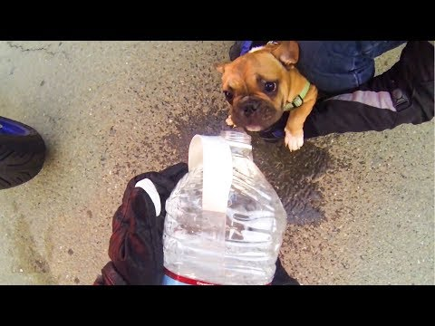 BIKERS RESCUE PUPPY FROM HOT CAR | RANDOM ACT OF KINDNESS |  [Ep. #22]