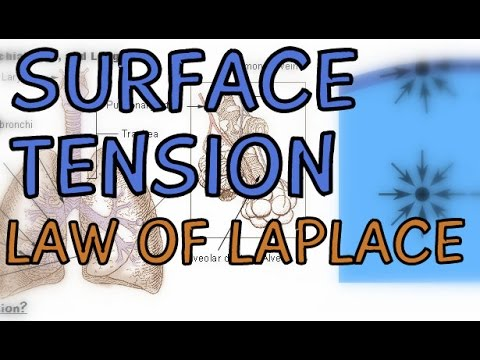 The Respiratory System: Surface Tension in the Lungs - Law of Laplace