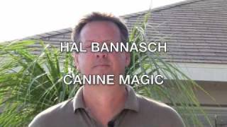 What Is Canine Magic ?