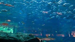Самый большой в мире аквариум. В Дубае.(Самый большой в мире аквариум в Дубай Молле. Аквариум рассчитан на 10мл.литров воды. Под аквариум ом находитс..., 2016-01-27T07:11:40.000Z)