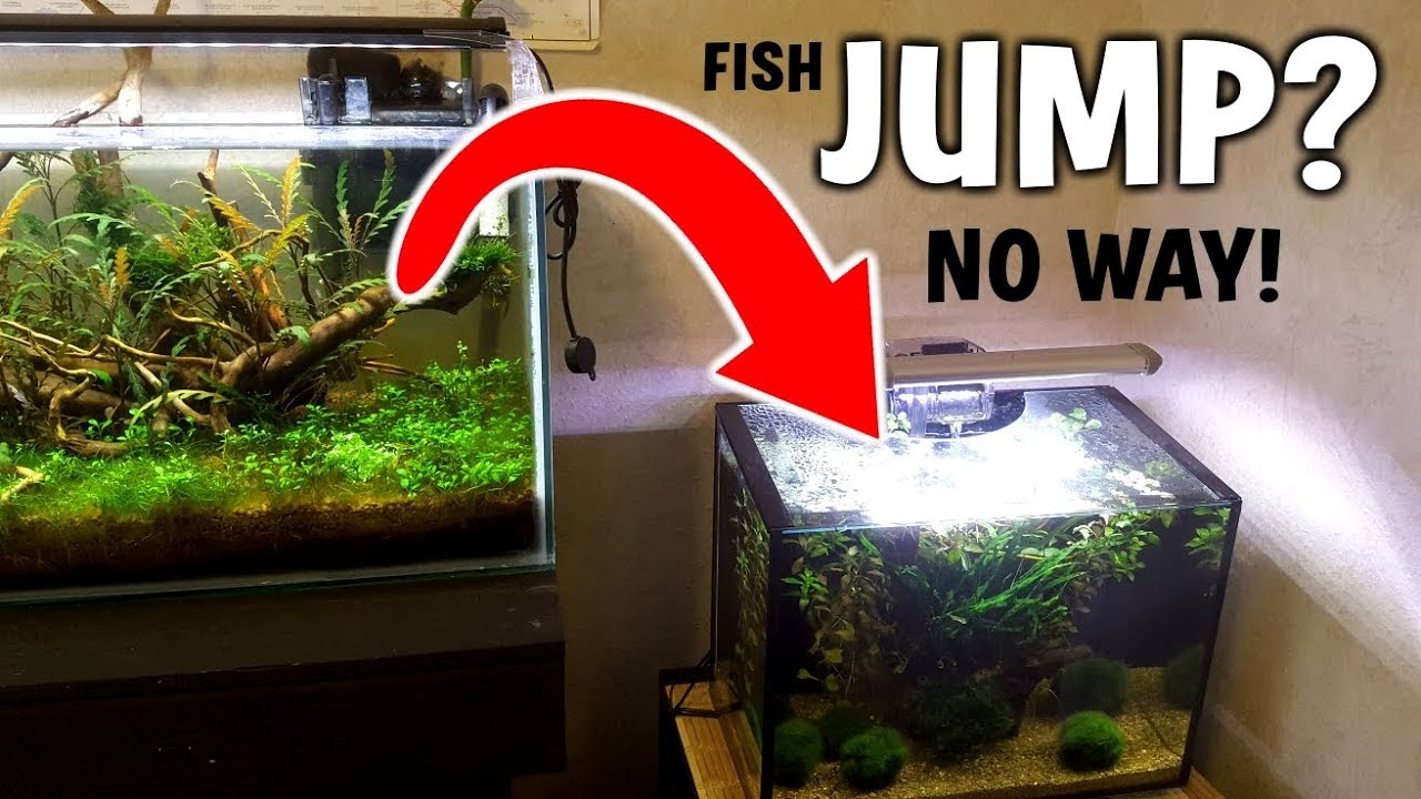 Epic Fish Jump No Not Really Youtube