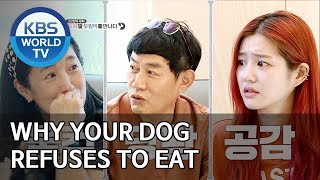 Why your dog refuses to eat [Dogs are incredible/ENG/2019.12.04]