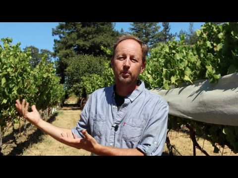 The different wine varieties of Napa, beyond Cab: Steve Matthiasson interview