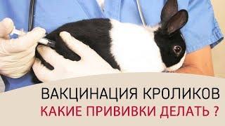ВАКЦИНАЦИЯ КРОЛИКОВ (часть 1) \\ Какие прививки делать кроликам. График прививок и советы ветеринара