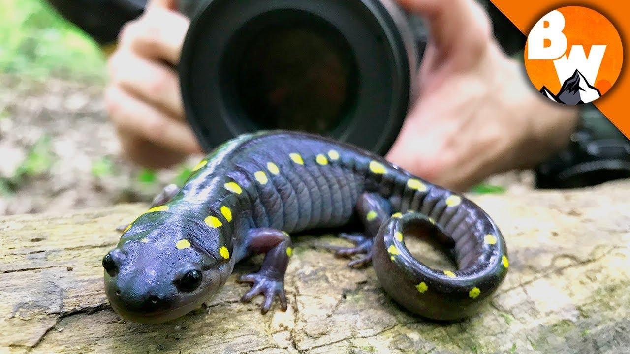 Salamander Smiles for Camera!