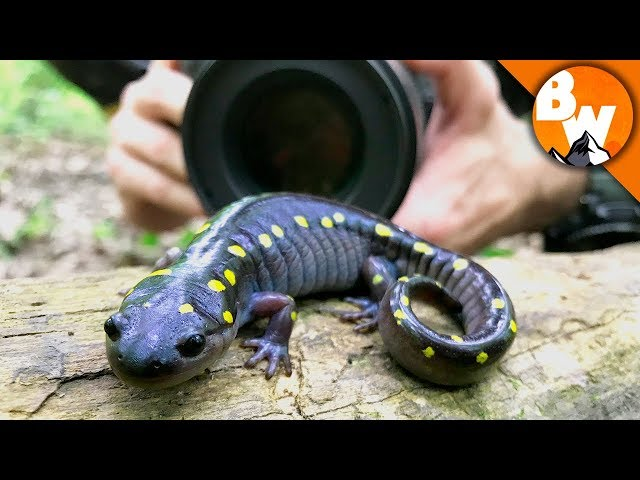 Salamander Smiles for Camera!