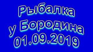 Рыбалка у Бородина 01 09 2019