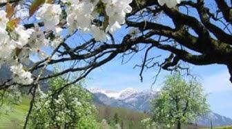 Frühlingsbilder zum Relaxen!;-)