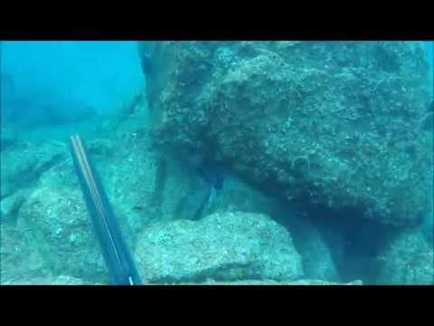 Spearfishing in La Paz, BAJA Mexico 2014