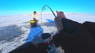 рыбалка зимой 2020 ТОЛЬКО ЗАКИНУЛ БАЛАНСИР СРАЗУ УДАР И БОНУС