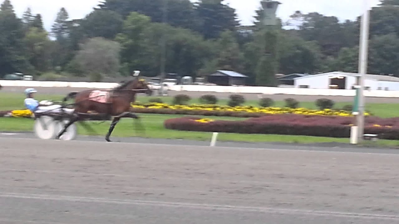 Saratoga Harness