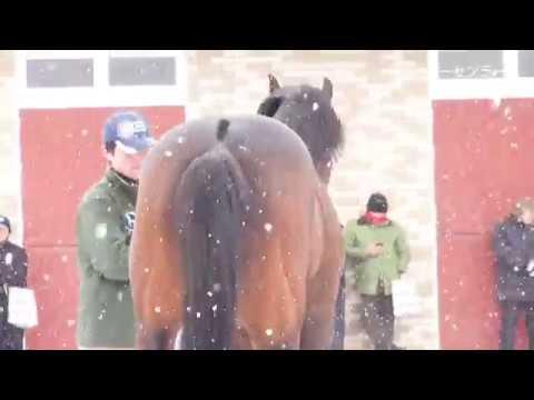 ブリーダーズ・スタリオンステーション種牡馬展示会2018(新種牡馬コパノリッキーなど18頭)