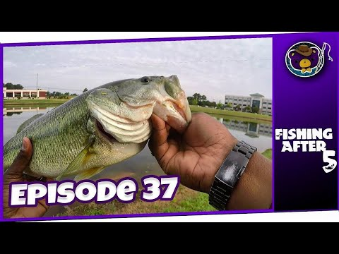 BIG Bass Galore! The Madison Hospital Pond Strikes Back! (Madison, AL) - Fishing After 5