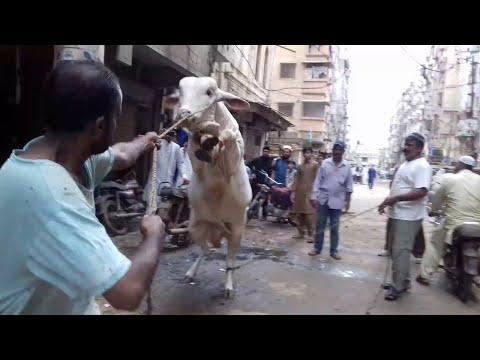 Bull Qurbani Video-Eid 3rd Day Eid Ul Adha 2020-BULL VIDEO   EID-UL-AZHA 2020-Bakra Eid 2020