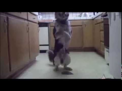 Smart Dog Does Some Amazing Tricks, Maybe Even The Smartest Dog In The World