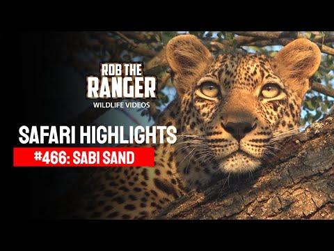 Idube Safari Highlights #466: 28 - 31 March 2017 (Latest Sightings) (4K Video)